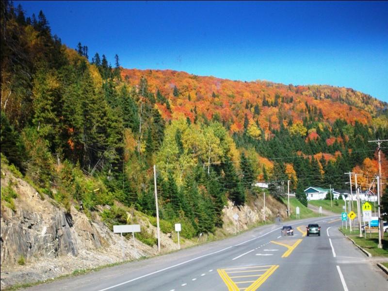 Quel arbre, emblématique du Canada, donne aux forêts québécoises cette superbe couleur rouge feu une fois l'automne venue.