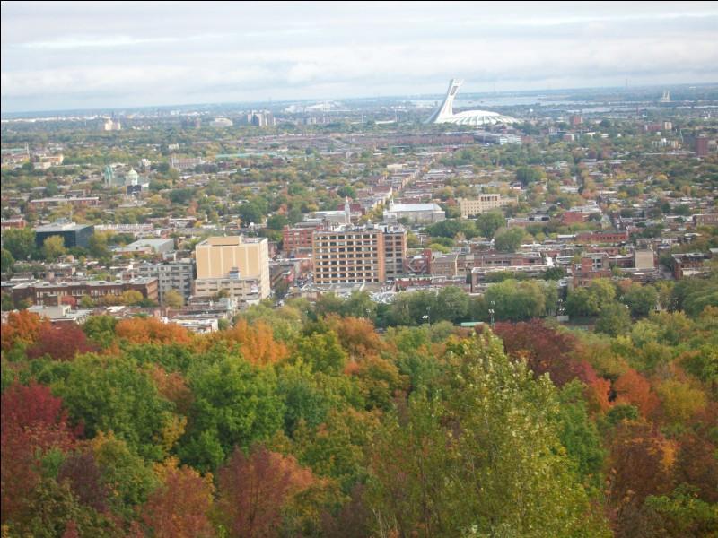 Pour commencer, voici une photo de Montréal prise depuis le Mont-Royal. Quel édifice emblématique de la ville apercevez-vous en blanc dans le fond de l'image ?