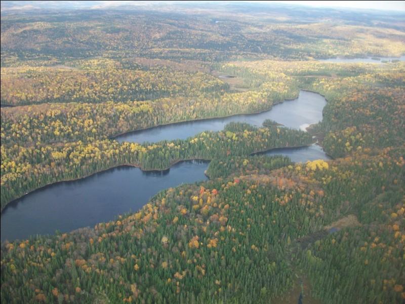 En poursuivant le cours du Saint-Laurent vers le nord, nous voici à Trois-Rivières. Quelle industrie a, pendant longtemps, assuré la prospérité de cette ville grâce aux vastes forêts qui l'entourent ?