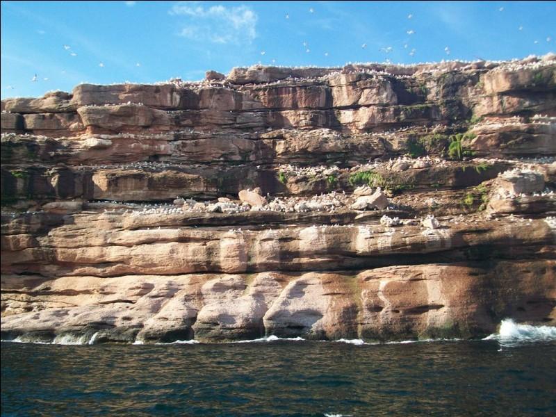 Non loin de là, voici l'île Bonaventure. Elle est célèbre pour abriter d'immenses colonies d'oiseaux. De quelle espèce ceux-ci sont-ils ?