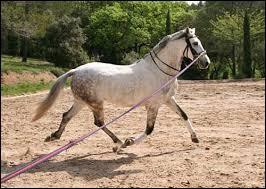 Quizz g n ral sur la sant du cheval en 30 questions - Combien de temps dure un coup de foudre ...