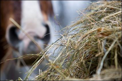 Quel aliment donne beaucoup d'énergie aux chevaux ?
