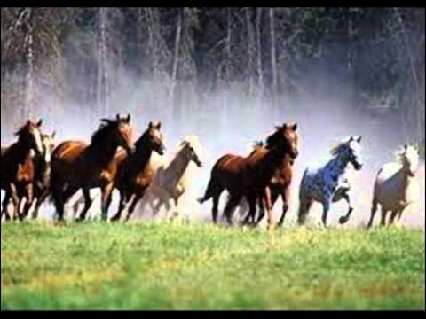 A quel âge débourre-t-on environ le cheval ?