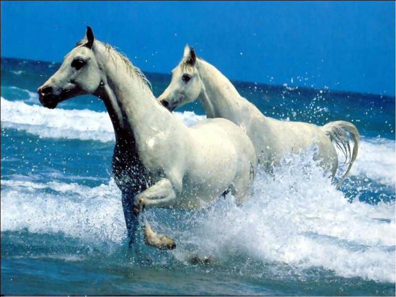 A partir de quel âge un cheval est-il susceptible de prendre sa retraite ?