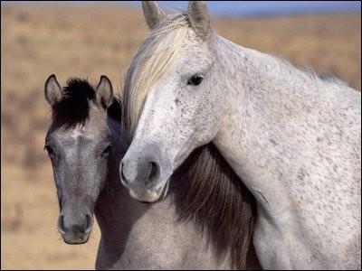 Un cheval peut refuser de manger car :