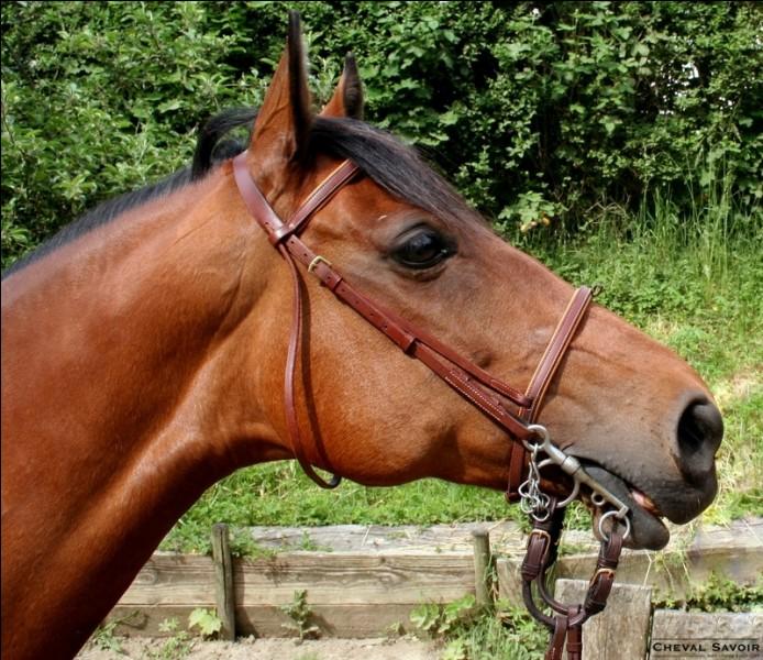 Comment s'appelle le dessus de la tête du cheval sous le front ?
