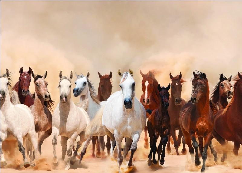 Quel instrument te permet de retirer l'eau pour sécher ton cheval après une bonne douche ?