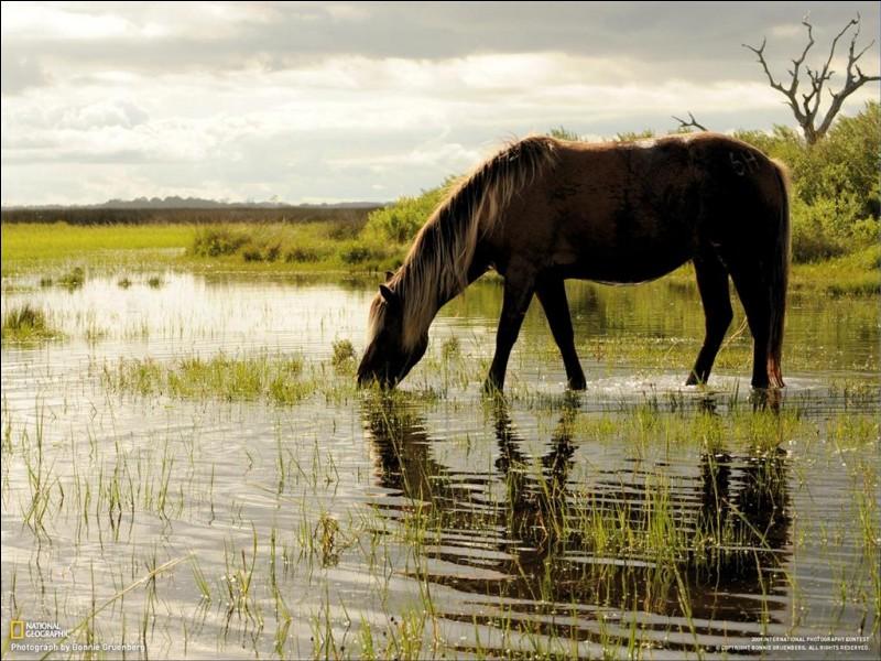 Un cheval boit en moyenne chaque jour :