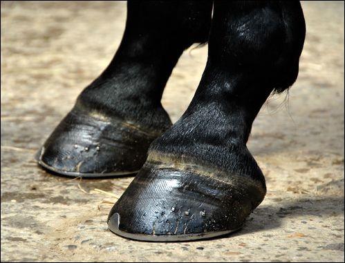 On retrouve sous le pied du cheval une partie qui porte le même nom qu'un couvert, lequel ?
