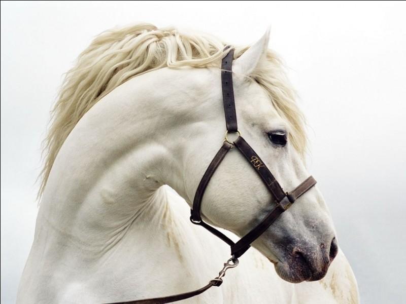 Le cheval marche sur combien de doigts ?