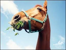 Combien de repas par jour environ un cheval doit-il prendre ?