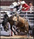Quelle est cette discipline pratiqué au Etats-Unis ? Le but tenir  le plus longtemps possible sur un cheval bien énervé.