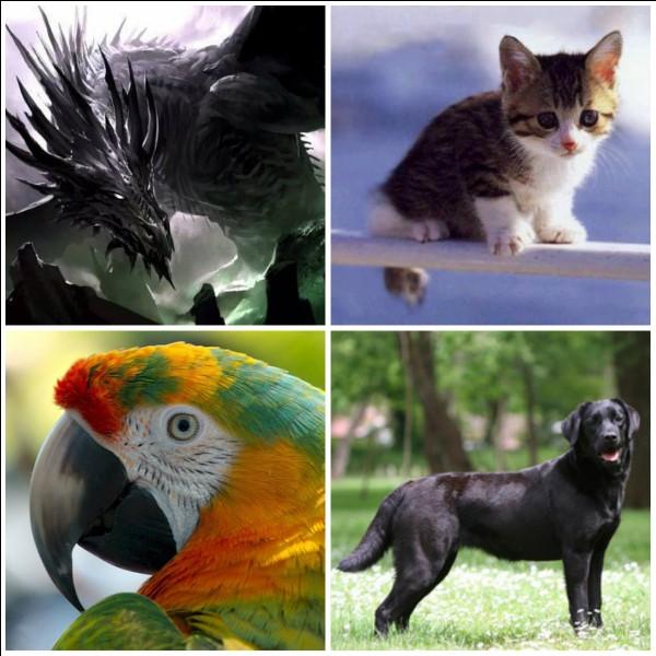 Ton animal préféré parmi ceux-là est...