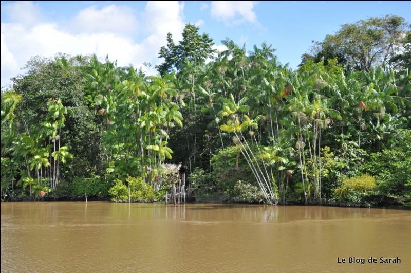 """On ne dit pas """"C'est l'Amazone"""", mais :"""