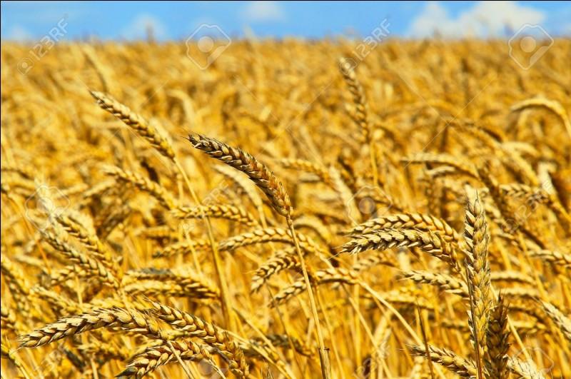 Dans le journal, quel est le prix pour 10 blés que l'on voit le plus ?