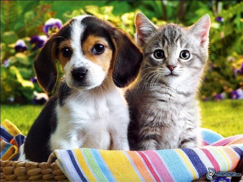 Choisis un animal de compagnie.