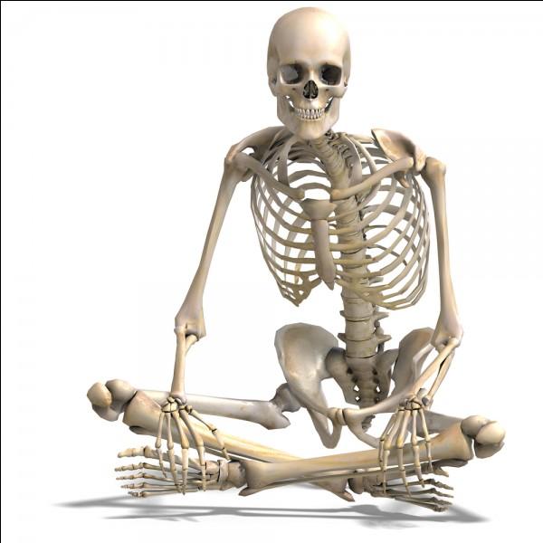 Cochez le/les nom(s) du/des squelette(s)