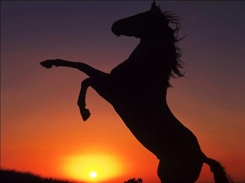 Combien pèse un cheval ?
