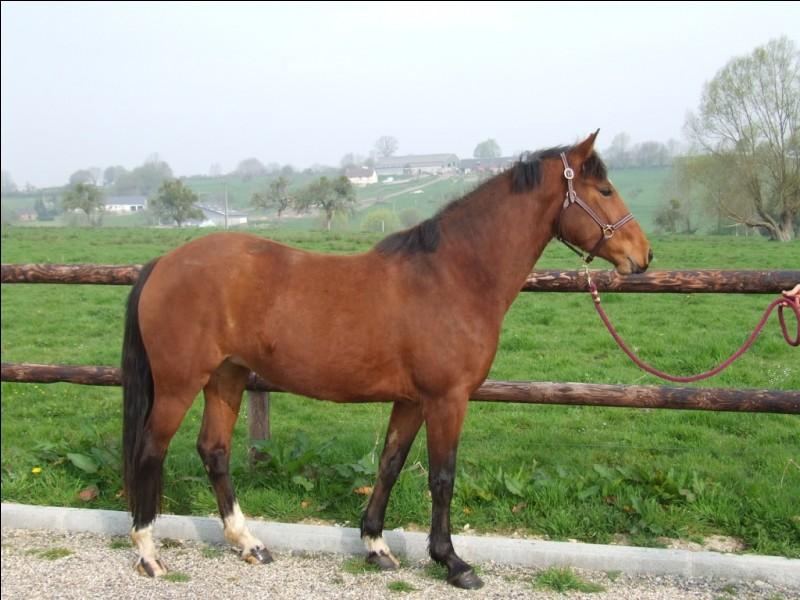 Quelle est la couleur de ce poney ?