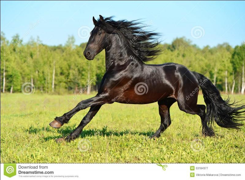 Quelle est la vitesse maximale d'un cheval ?