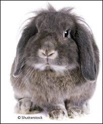 Combien d'années vit un lapin en moyenne ?