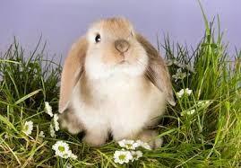 Connaissez-vous réellement les lapins ?
