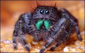 Quel est le comble pour une araignée ?