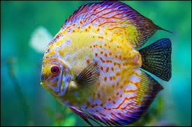 Quel est le seul fruit que les poissons détestent ?