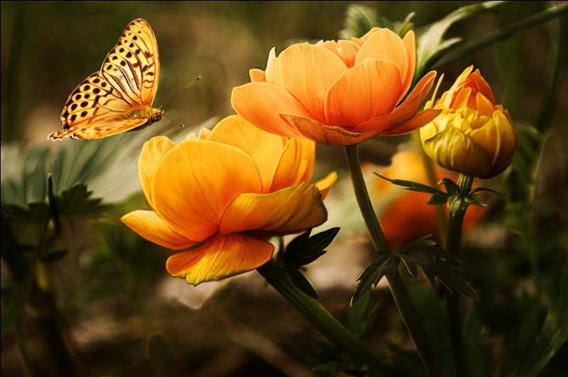 """L - Un """" lépidoptérophile"""" collectionne les papillons."""