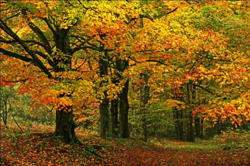 """H - Un """"hylophobe"""" a peur des arbres, des forêts ."""