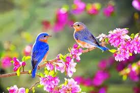Chansons : Le printemps