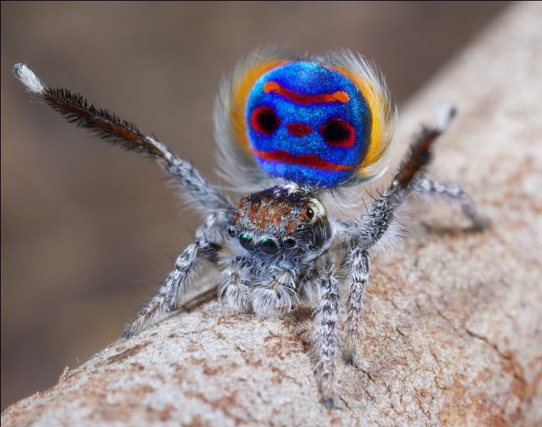 Aragog, l'araignée géante, est un(e)...