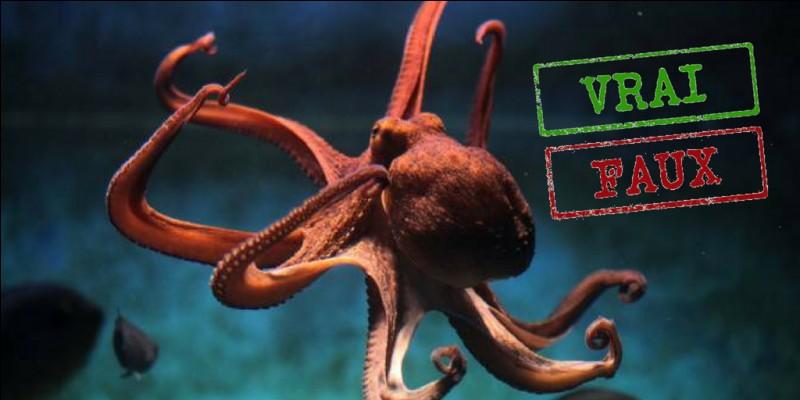 Vrai ou faux ? La pieuvre possède un bec.