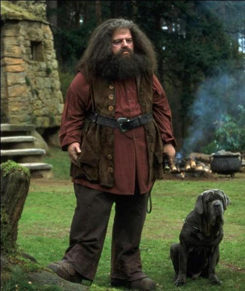 Quel sort Hagrid lance-t-il à Dudley ?
