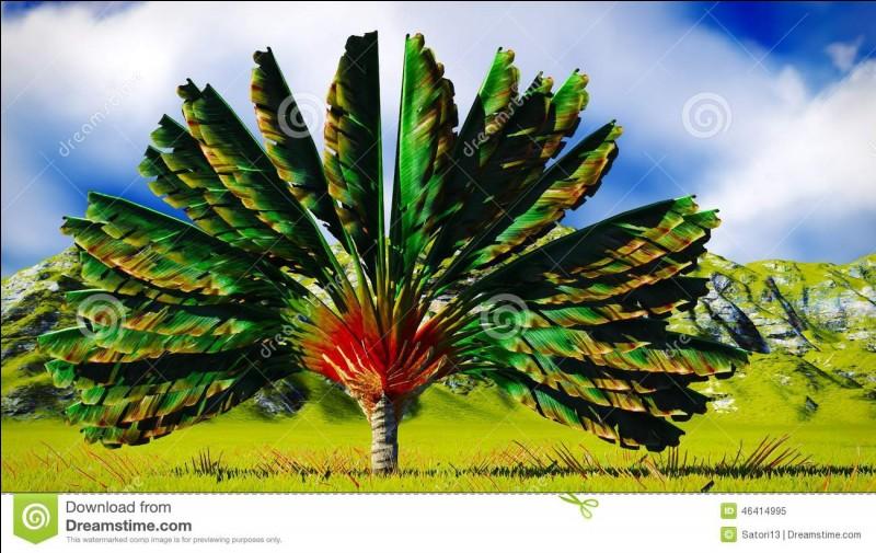 Il est originaire de ce continent, mais depuis, il a fait le tour du monde : l'arbre du voyageur !