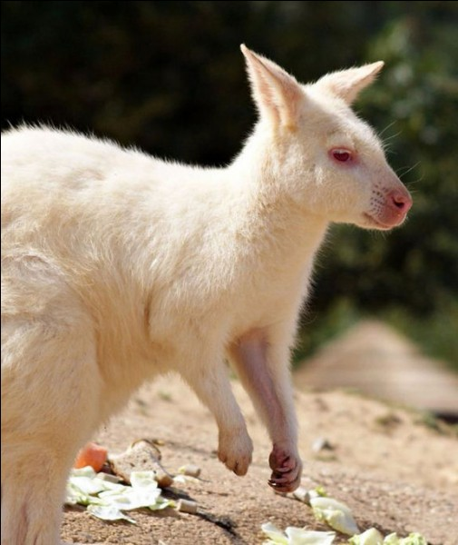 Identifiez l'albinos, et c'est gagné !