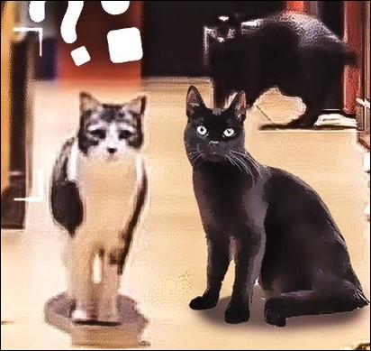 Quels sont les noms des chats de Neoxi?