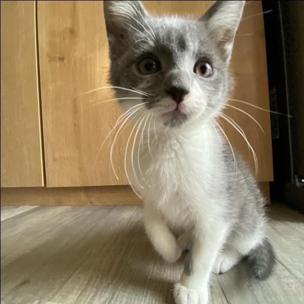Recueilli par VodK, un nouveau chaton a rejoint SamSam et ProutProut. Il s'agit de...