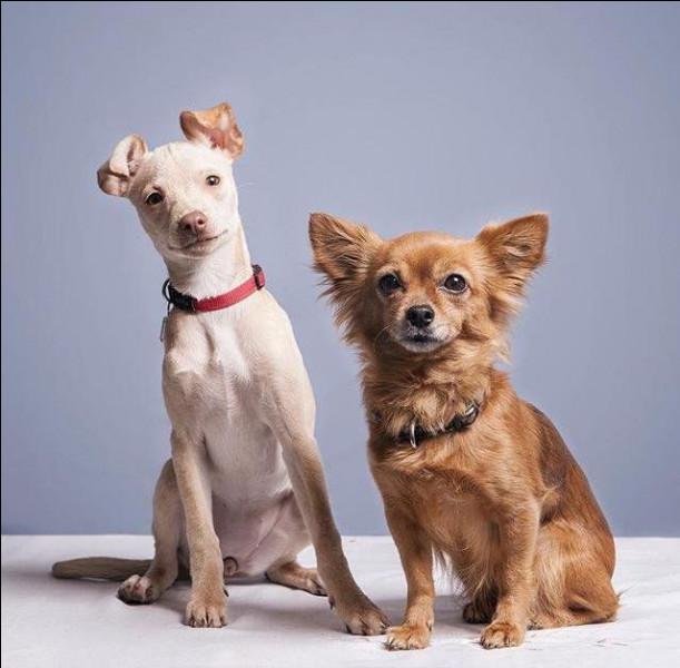 Quel est le nom de chacune des deux chiennes de Natoo ?