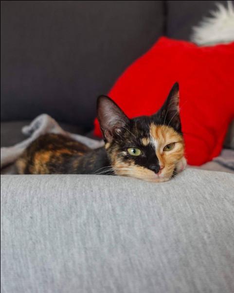 Mastu qui vient d'adopter un nouveau chaton ! Comment s'appelle-t-elle ?