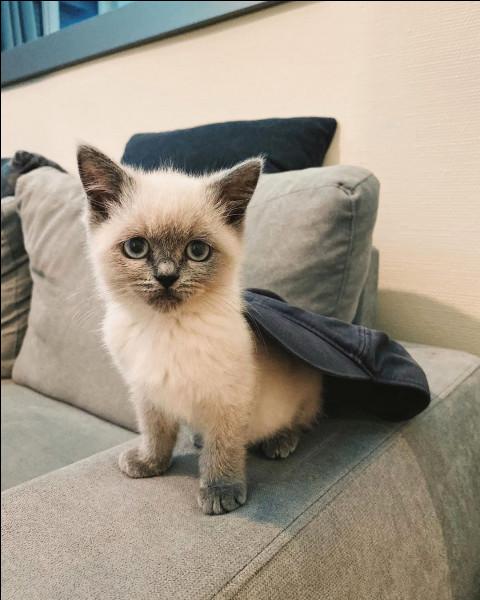Comme se nomme le chat de Darko ?