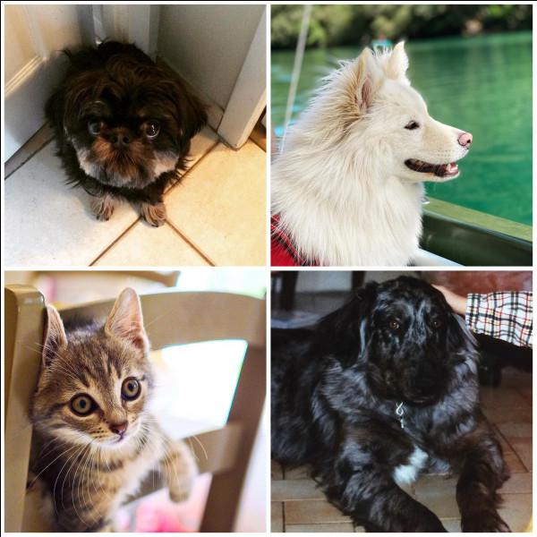 Dans la vie de qui ces animaux ont-ils été/sont présents ?