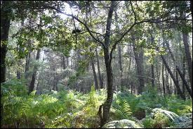 Dans lequel des trois films, Chaudard, Pithivier et Tassin se retrouvent-ils dans la Forêt de Machecoul ?