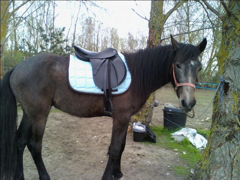 Par quel côté montez-vous à cheval ?