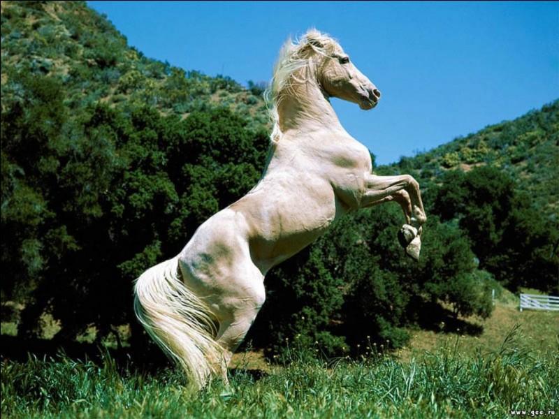 Si votre cheval met les oreilles en arrière, c'est signe :