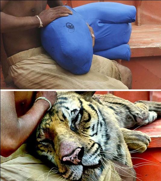 Entre les fonds bleus ou verts et les objets représentant les partenaires, on se prend à admirer les comédiens, comme ici, dans cette scène où l'acteur parvient à nous faire croire qu'il caresse un tigre (On admire les effets spéciaux aussi). Quel est ce film?