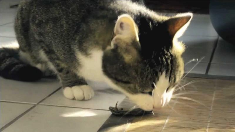 Quel est régime alimentaire du chat en principe ?