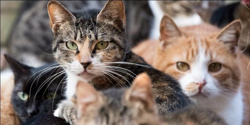De quelle famille fait partie le chat ?