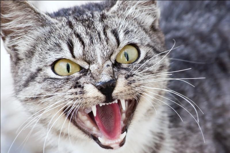 Qu'appelle-t-on les vibrisses du chat ?