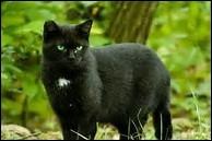 Avec quel chat Nuage de Jais vit-il depuis qu'il a quitté le Clan du Tonnerre ?